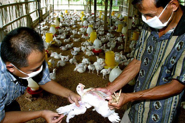 bird-flu