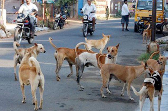stray-animals